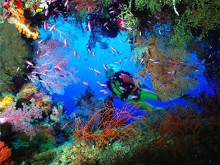 - Scuba Diver Course - 2 Days - Bequia -