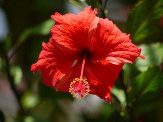 Falmouth Antigua and Barbuda Vacation Rentals - Villa