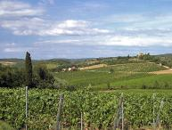 Two Chianti Farmhouses for Large Group on a Wine Estate - Casa del Grano and Fieno